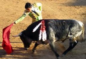 Bullfight photo